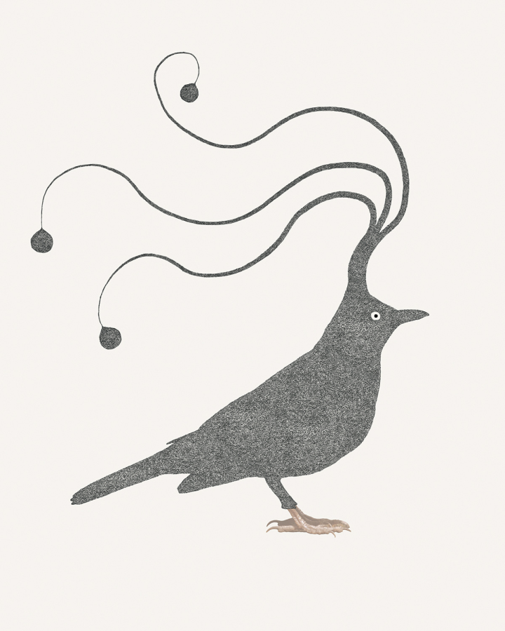 sleepybird_blackbird