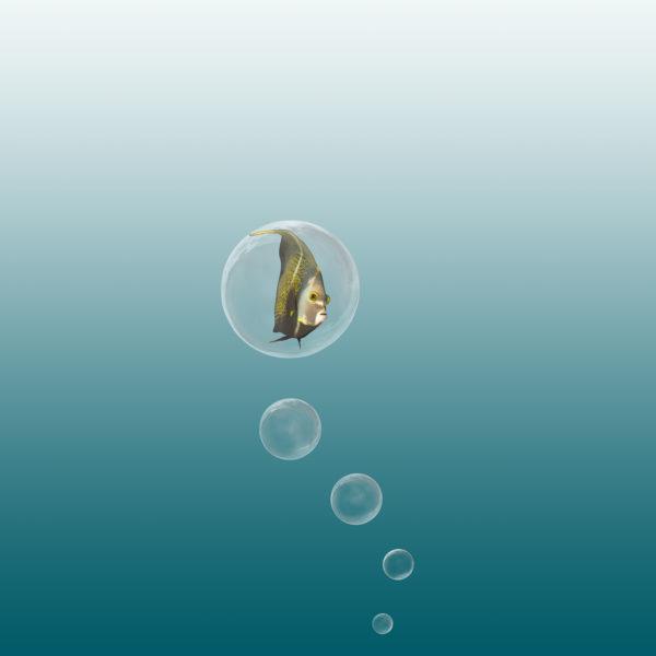 vis in luchtbel