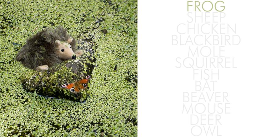 Hedgehog_002_frog