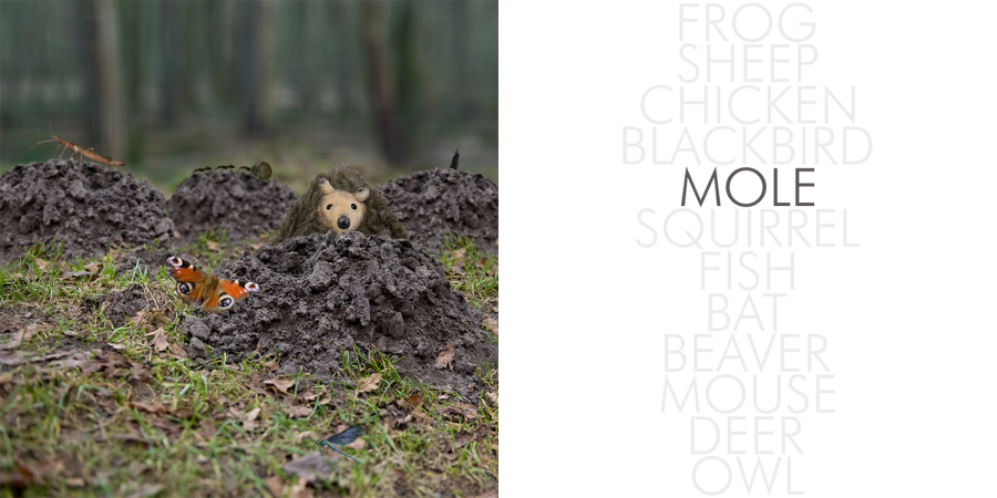 Hedgehog_002_mole