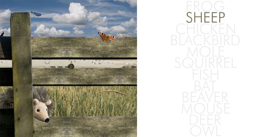 Hedgehog_002_sheep