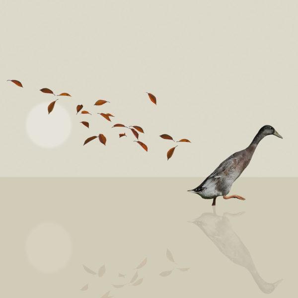 runner duck 1
