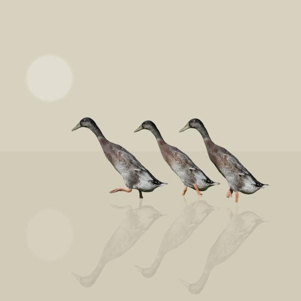 runner duck 3