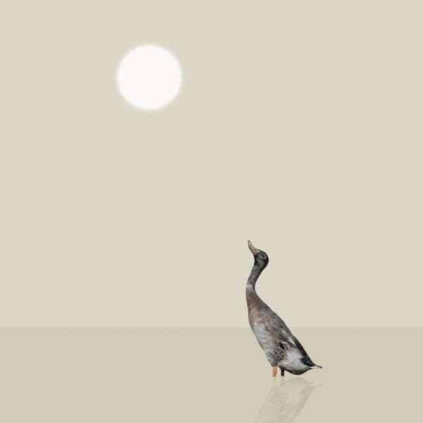 runner duck 4