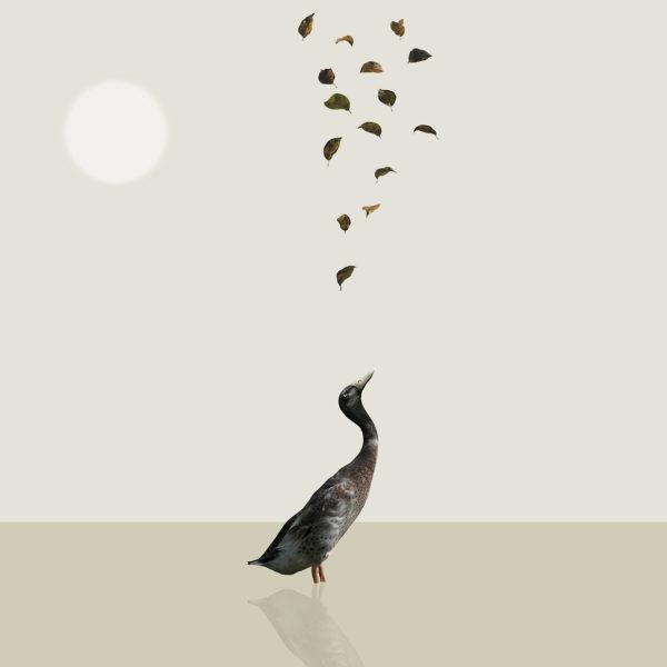 runner duck 5