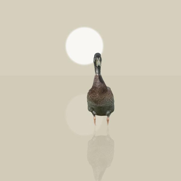 runner duck 6