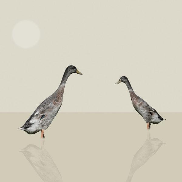 runner duck 7