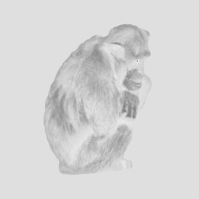 chimp_1